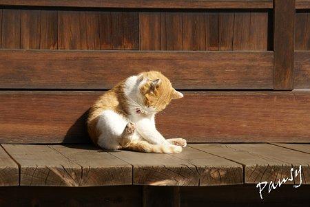 陽だまりの猫・・浄妙寺5