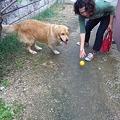 Photos: 庭でボール遊びも楽しんで