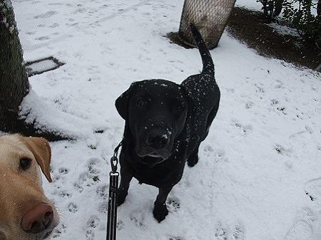 雪ボール欲しいか?!