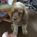 Photos: 「お手!」