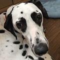 Photos: 見張り犬です
