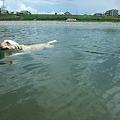 Photos: 泳ぎは大得意の2頭です♪