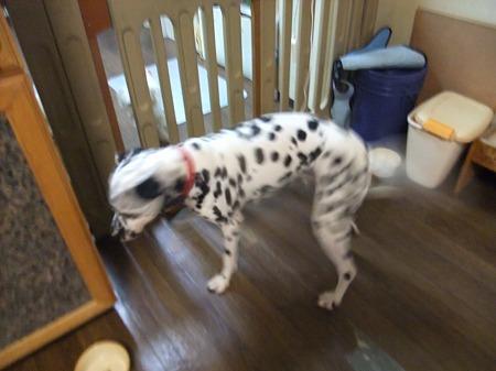 犬と遊びたいウィル