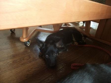 机の下に避難