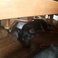 Photos: 机の下に避難