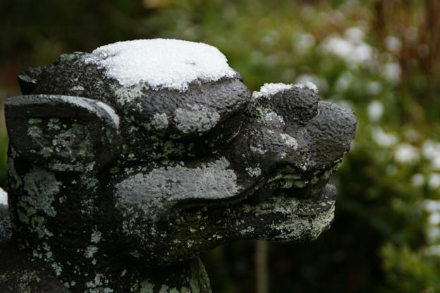 Photos: 白帽子の亀像!(110212)