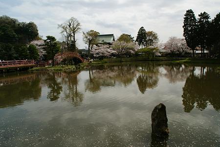心字池に写りこむ桜風景!(110410)