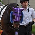 Photos: Purple Taiyo