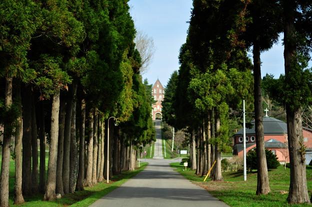 聖域の並木
