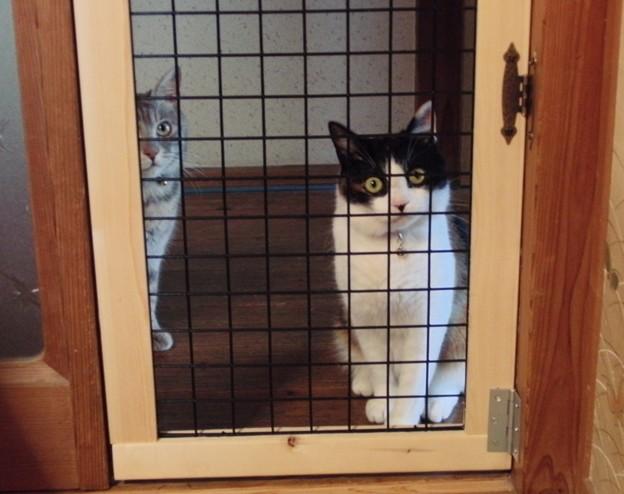 猫侵入防止