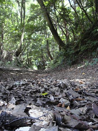 木漏れ日と枯葉坂