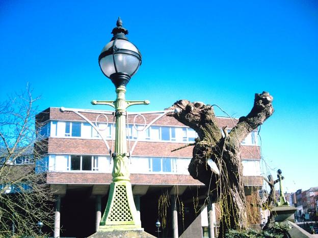 ランプと木