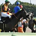 Photos: 騎手は鞭をくわえ、馬はブハッ