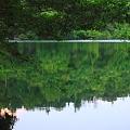 深い森の中の静寂