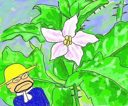 ワルナスビの花