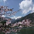 桜の抜けに千畳敷