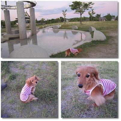20110717 お散歩