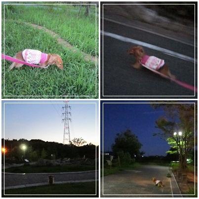 20110908 お散歩