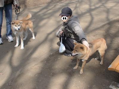 5ヶ月の秋田犬