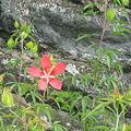 Photos: 海洋公園溶岩の名残