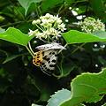 ?花と?蝶々