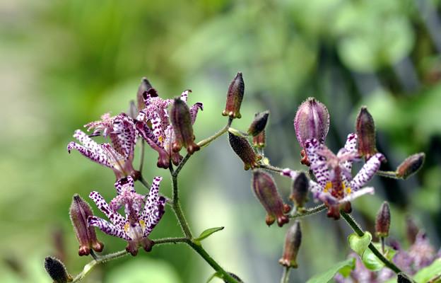 Photos: 賑やかに咲く