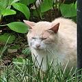 Photos: 招き猫実写版!?